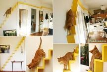 cat in flat
