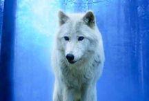 Wolf♡