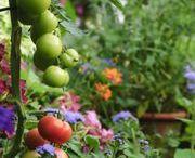 Welcome!! Scroll Through My Edible Garden. / by Deborah G.