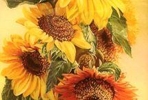 Słoneczniki