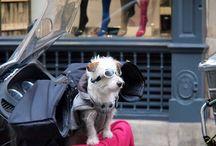Les chiens / by Kara Marie Dober