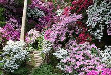 zahrada... dům / stále kvetoucí