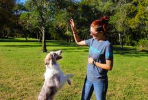 Puppy Training Austin / Do you have a dog behavior problem? Check here to find tips and solutions for your dogs.