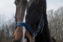 H4H - Horses Saved 2012