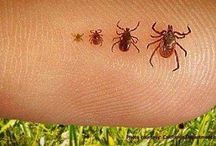 tick/flea repellant