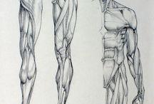 Anatomie / Etudes des corps