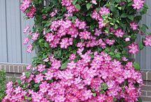 Jardinage - Fleurs