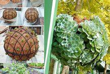 záhrada, nápady s rastlinami
