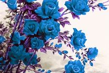 Bouquets Delivery In Dehradun / Send flowers to dehradun, flowers delivery in dehradun, best florist in dehradun, online florist in dehradun, same day flower delivery in dehradun, dehradun online florist, midnight flower delivery in dehradun, birthday flowers in dehradun, cakes delivery in dehradun by dehradun florist.  http://www.onlineflowersgift.com/send-flowers/dehradun