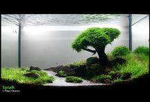 sladkovodní akvária