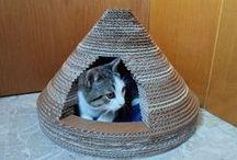 maison à chat