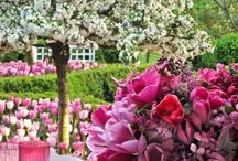 Garden Beauty / by Special Effects Decorating