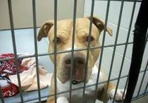 Animal Advocacy: Alerts ~ Abuse ~ Arrested ~ Petitions ~  Chip-ins ~ Event Flyers / .