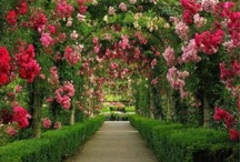 lovely garden / by Angee Turnbull