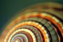 Y10 Fusion- snail shells
