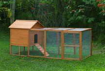 Chickens & Gardening Ideas