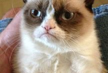 Grumpy Cat / by T3kT3hGrrl T3hGrrl