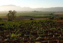 El Valle / Valle de Guadalupe, Ensenada, Baja California, México. Baja`s Wine Country. // Diversas imágenes de la identidad y esencia de nuestro hermosos valle.