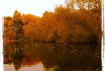 Efterårsstemning / Efterår autumn