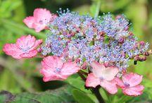 Pielęgnacja kwiatów