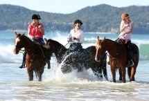 Equathon Horse Riding / Address:  Beach Road, Noosa North Shore  QLD 4565 Phone:  +61 7 5446 5494 Email:  info@equathon.com Web:  www.equathon.com / by Queensland Ecotourism Directory