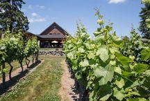 Vineyard Cafe / Locally-sourced ingredients + farm-focused menu overlooking the vineyard.