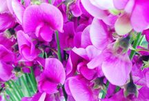 """flower photo"" Hideyuki Nwa Design"