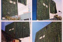 Muro verde Japay / La mejor opción !