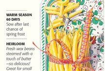 Botanical Interest - Beans