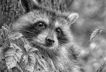 Realistic Wildlife Pencil Drawings by Denis Mayer Jr. / Realistic Wildlife Pencil Drawings by Denis Mayer Jr.