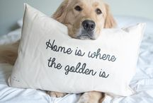 Home is where the golden is