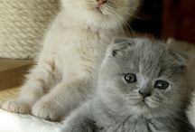 Nice animals