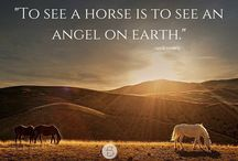 Inspiring words / Words to encourage, motivate, and educate all horse lovers.