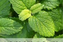 Herbal and Botanical Goodies