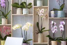 Orchideen ☆-☆