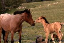 Baby horse / Baby horse pictures