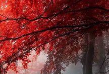 drzewa foto