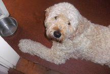 doedel / Onze  hond