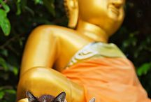 Cats and buddha
