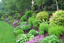 Landscaping loves  / by Melody Shaw