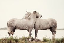 αλογα