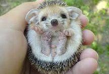 Cutest animals :)