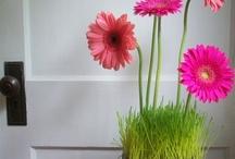 Flowers/Flores