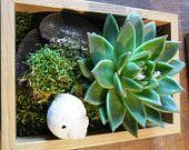 kokedama / A kokedama egy japán eredetű növény-művészeti ág.A gömböt borító moha bizonyos kultúrákban a remény, az újjászületés és a feltámadás jelképe. https://www.facebook.com/mossminiplanetforyou
