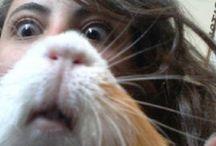 Hamsters As Pets