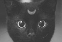 Black Cats / by Tessa Babus