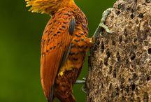 unusual birds