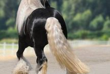 Equestrian / by Tara Byakko