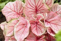 pretty leafs