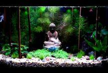 acquario zen
